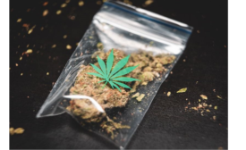 Job Market High for Design and Packaging in Cannabis Market