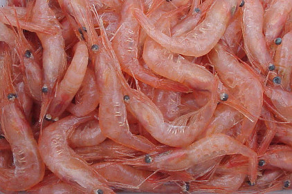 Thin film made of shrimp shells